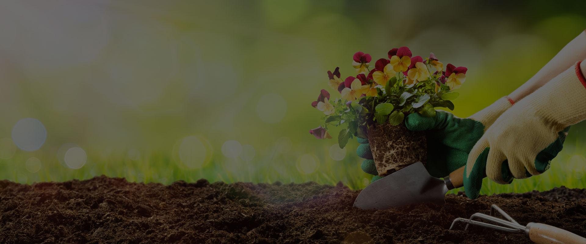 plantes pour le jardin
