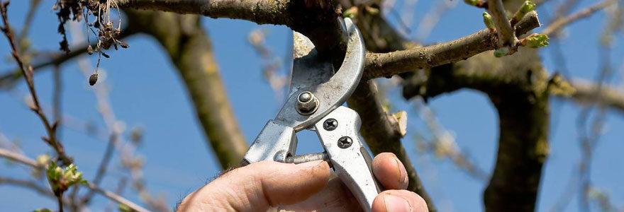 tailler votre cerisier